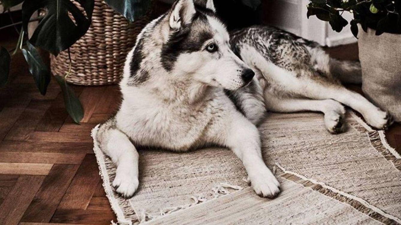 Ikea, Leroy Merlin y Maisons du Monde saben todo lo que una alfombra hará por ti
