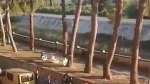 Un toro escapa por las calles de Algemesí y la Policía lo abate de un disparo