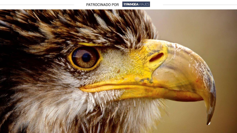 Curso de fotografía salvaje con aves rapaces como 'modelos' de excepción