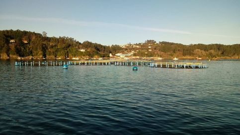 1,2M de besugos en jaulas y sin comida desde noviembre por la crisis de una pesquera