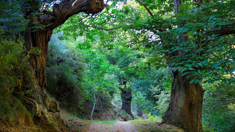 Uno de los bosques que abrazan a la localidad de San Facundo. (EC)