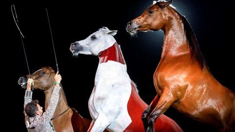 Los caballos pura raza española salen del confinamiento para trotar en Sevilla