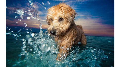Las mejores fotos de perros del mundo, según el Kennel Club