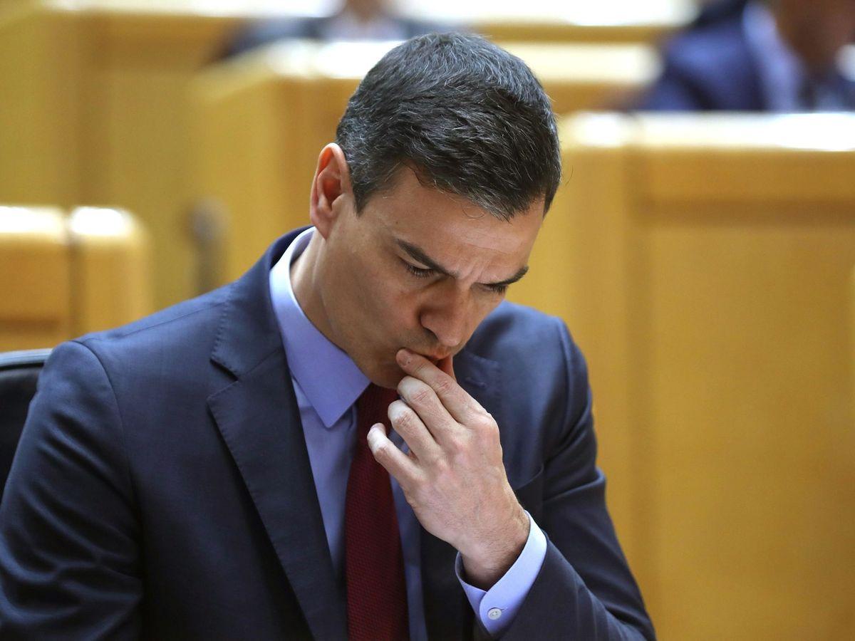 Foto: Pedro Sánchez, en el Senado. (EFE)
