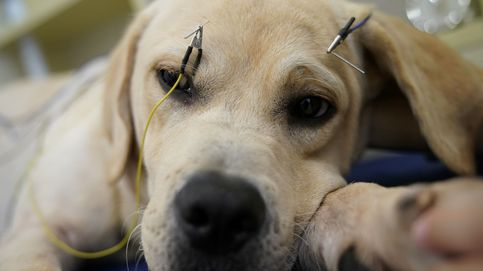 La acupuntura animal es una realidad... y en China lo saben muy bien