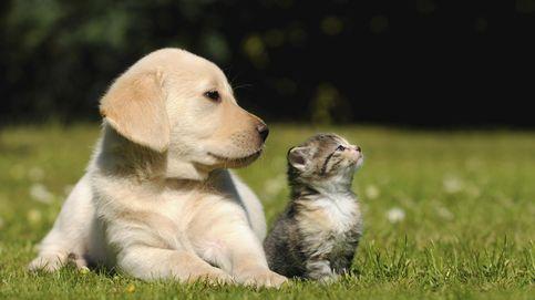 Más perros que bebés: los 'singles' disparan las ventas de comida para mascotas