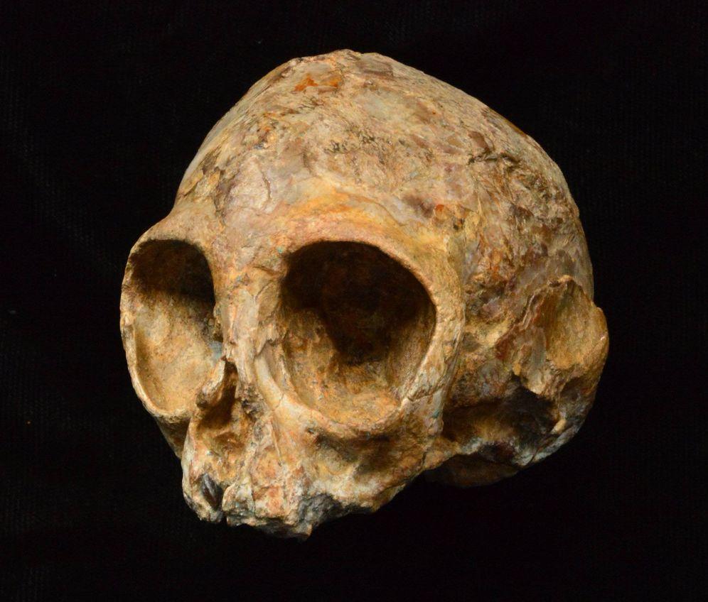 Foto: Cráneo de 13 millones de años encontrado en Kenia (Nature)