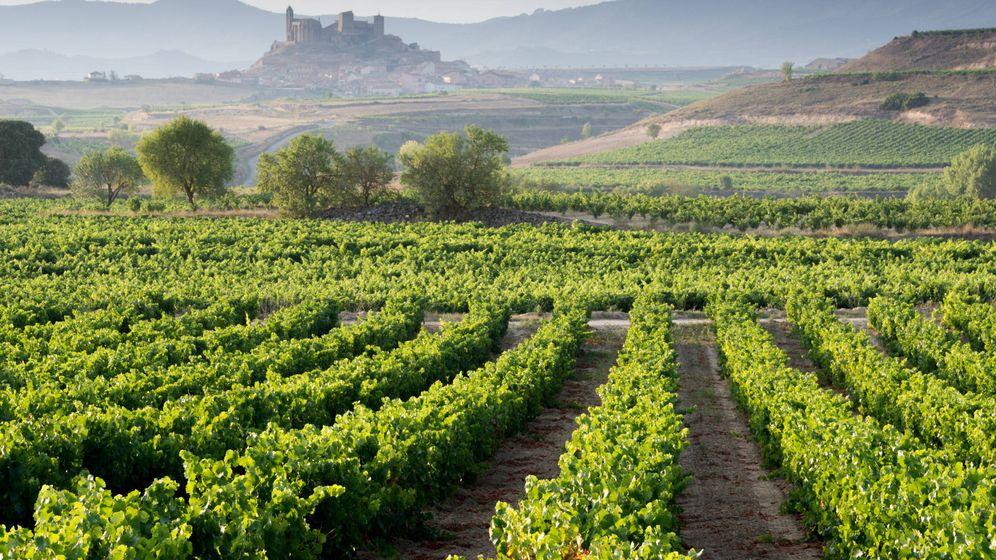 Foto: Viñedos en San Vicente de la Sonsierra, La Rioja. (iStock)