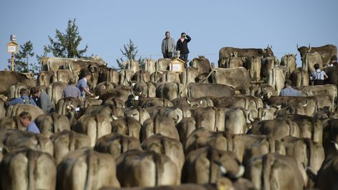 Feria del ganado en Schwellbrunn