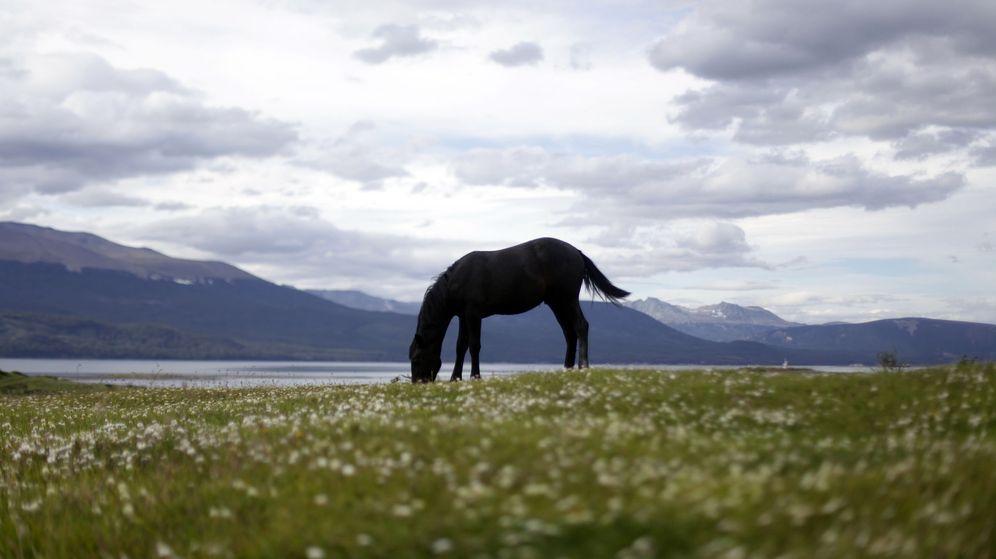 Foto: Un caballo en un prado. (EFE)