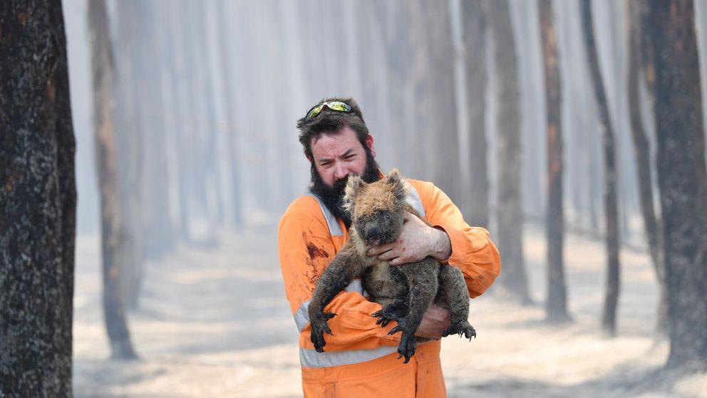 Esto es solo el principio: todo lo que se esconde detrás de los incendios de Australia