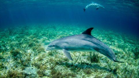 La dieta del delfín: en qué consiste y si realmente funciona