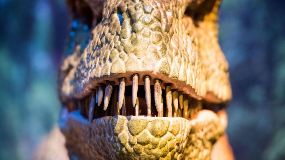 Foto: Los dinosaurios serían los antepasados de pájaros y tortugas (EFE/Lukas Barth)