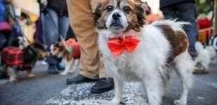 Post de Los perros entienden de manera innata las señales humanas