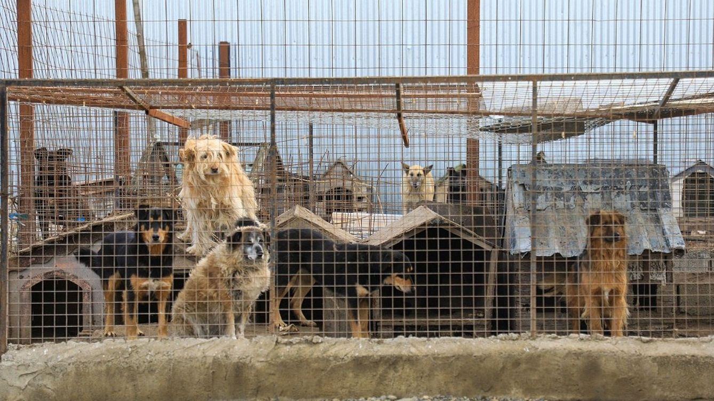 Condenado a pagar 1.992 euros después de que su perro fuera atropellado