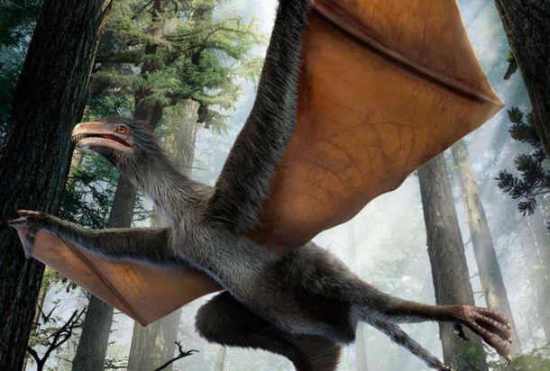 Foto: Descubren un pequeño dinosaurio chino con alas de murciélago