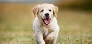 Post de Por qué nos parece que los perros sonríen: una historia de 30.000 años