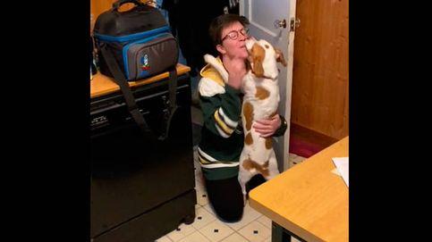 El reencuentro entre un perro y su persona favorita que enamora a internet