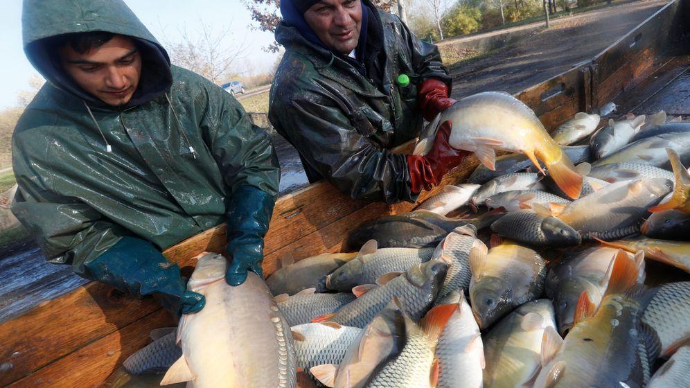 Foto: Pescadores húngaros de agua dulce clasifican el pescado (Laszlo Balogh / Reuters)