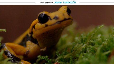 Salamandra, el anfibio sedentario: solo se mueve para parir