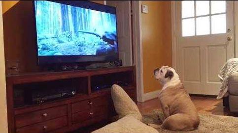 Este perro trata de salvar a Leonardo DiCaprio en El Renacido