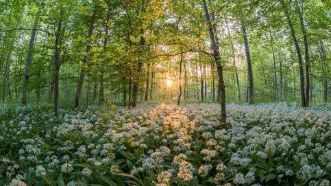Plantar 3.000 millones de árboles. El plan de la UE para salvar los bosques