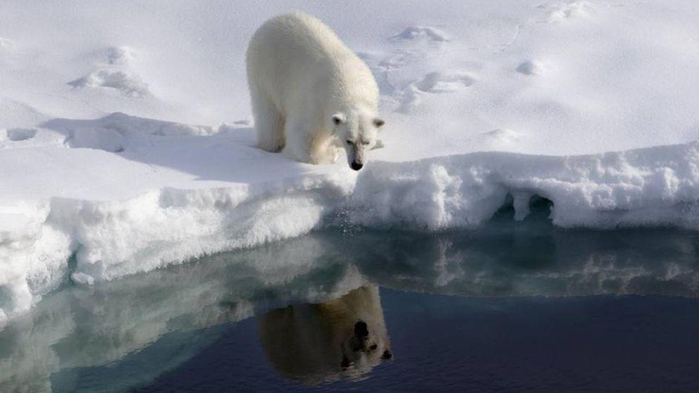 Hace cuatro millones de años no había hielo en el Polo Norte