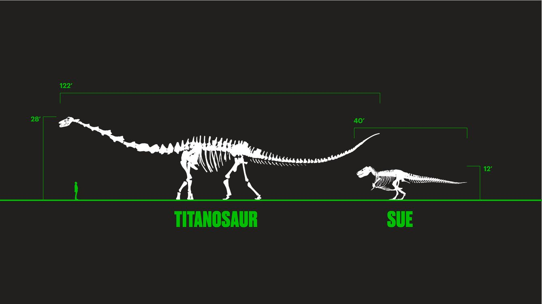Descubren los restos del que podría ser el animal más grande de la historia