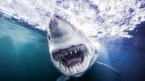 Colmillos de película. Michael Muller caza a los grandes tiburones