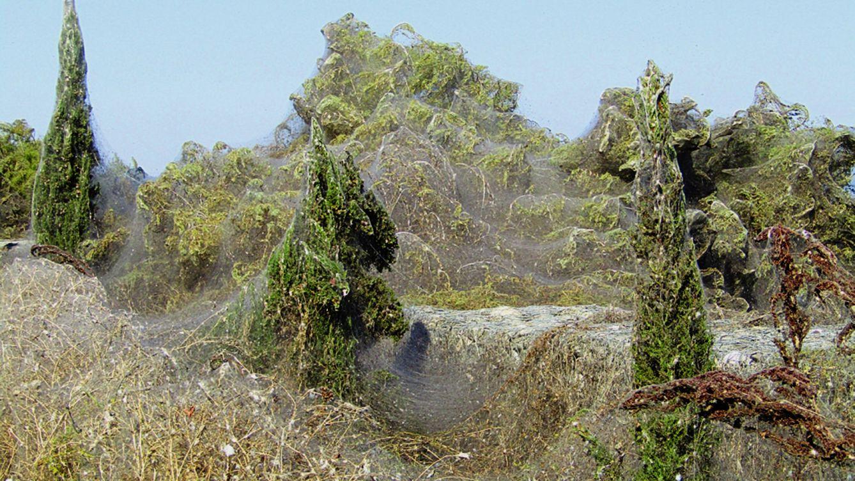Una de las zonas más turísticas de México se llena de kilómetros de telarañas