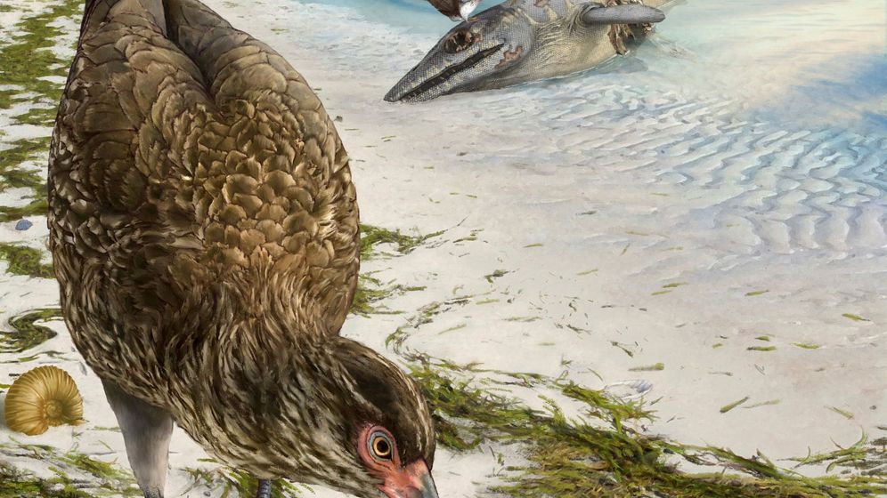 Foto: Reconstrucción del pájaro moderno más antiguo Asteriornis maastrichtensis, en su ecositema original. Foto:  EFE Phillip Krzeminski Nature