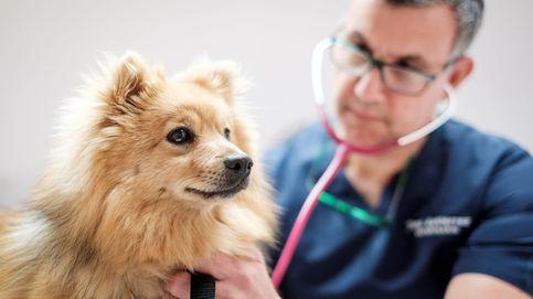 Tu perro ya experimenta el futuro cercano que le espera a nuestros seguros de salud