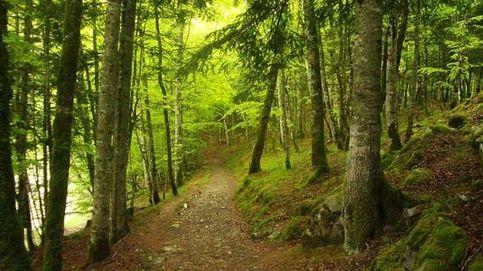 Una enfermedad hace que la mitad de los árboles autóctonos europeos puedan morir