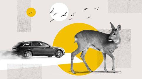 El Dato | Otras víctimas de la carretera: 120.000 animales muertos desde 2015