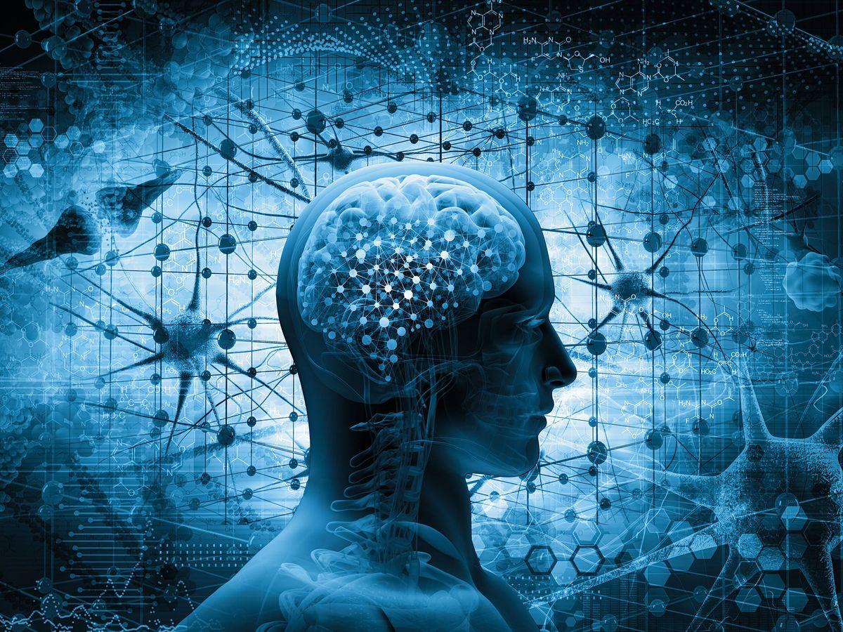 Foto: Los dos lados diferentes del cerebro se ocupan de cuestiones diferentes (Foto: iStock)