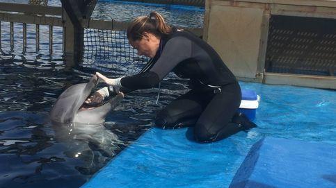 Se acabó el espectáculo: por qué el mayor delfinario de España está fichando científicos