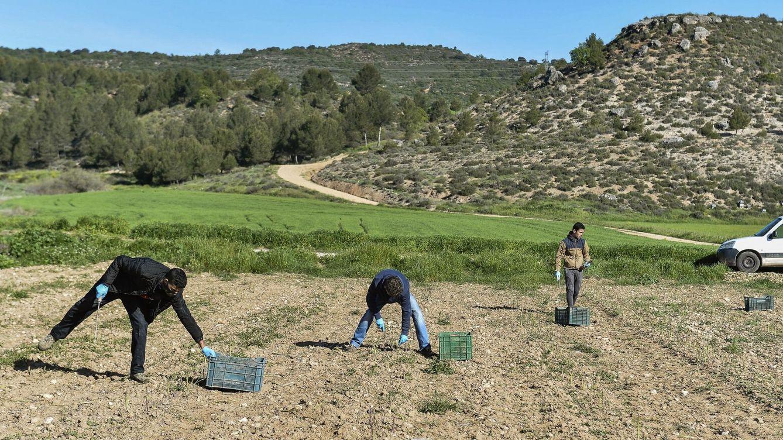 España se dispone a reforzar su apuesta por la agricultura ecológica