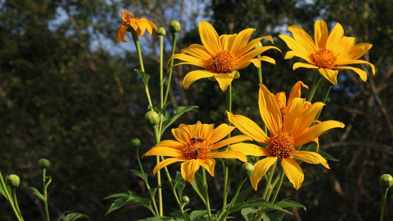 La caléndula se convierte en una de las aliadas plantas para cuidar la piel justo después de tomar el sol. (Unsplash)