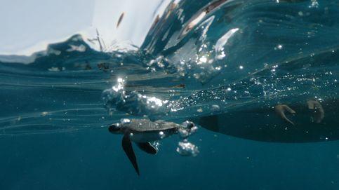 Salvando a las tortugas en Israel