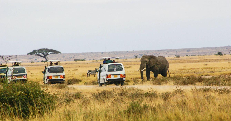Safari en Kenia. (Shutterstock)