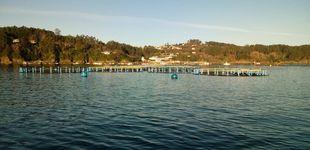 Post de 1,2M de besugos en jaulas y sin comida desde noviembre por la crisis de una pesquera