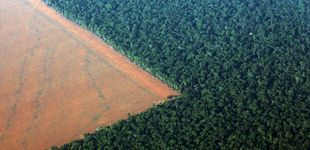 Post de Ganó Bolsonaro, pierde la Amazonia: todo lo que esta victoria implica para el planeta