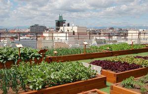 El ayuntamiento oferta 17 huertos urbanos ecológicos en el corazón de Madrid