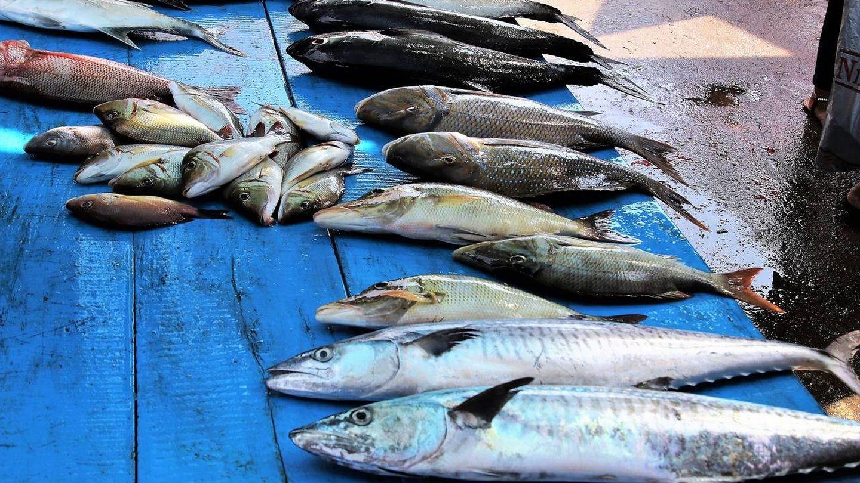 El pescado en mal estado puede provocar escombroidosis.