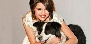Post de Celebs y cachorritos: las famosas que han adoptado perros durante el aislamiento