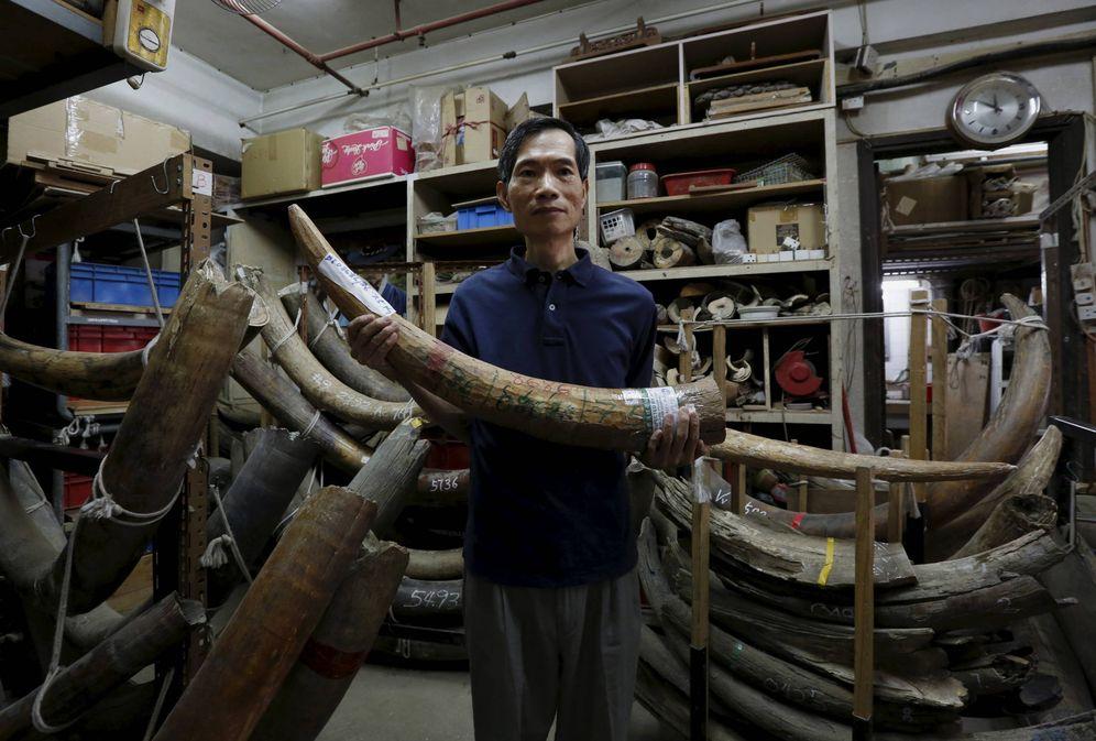 Foto: Un trabajador de un establecimiento de artesanía muestra un colmillo de elefante, en Hong Kong, en octubre de 2015. (Reuters)