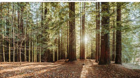 Descubre este verano el bosque de secuoyas gigantes escondido en el norte de España