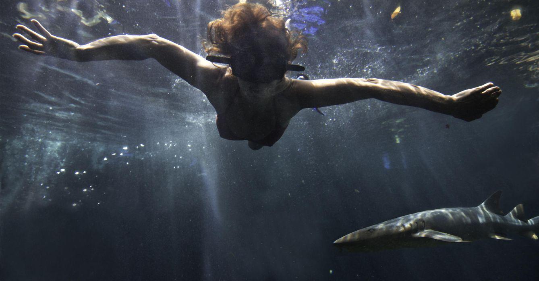 Foto: Buceo con rayas y tiburones (Foto: Cortesía Xcaret México)