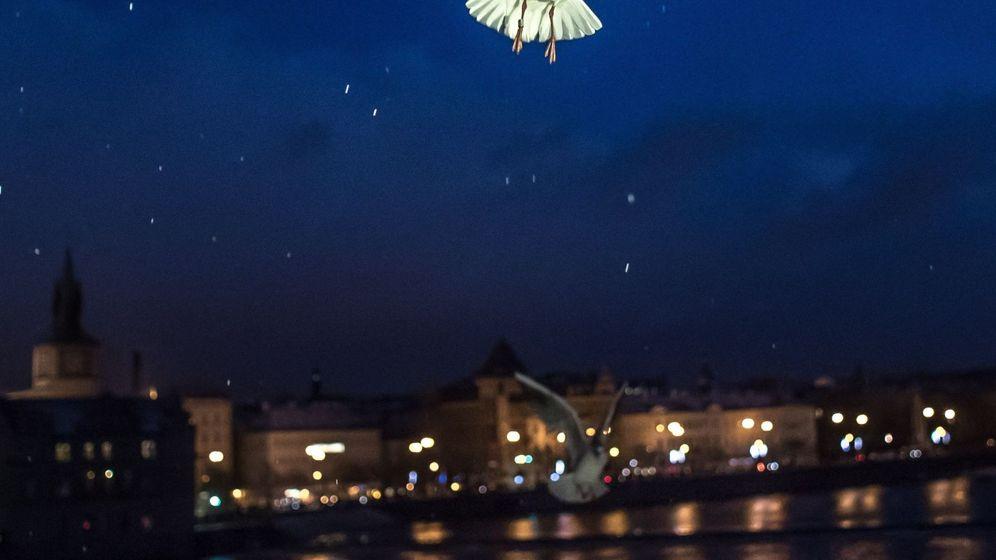 Foto: Una gaviota vuela cerca del Puente Carlos sobre las aguas del río Moldava, en Praga. (EFE)