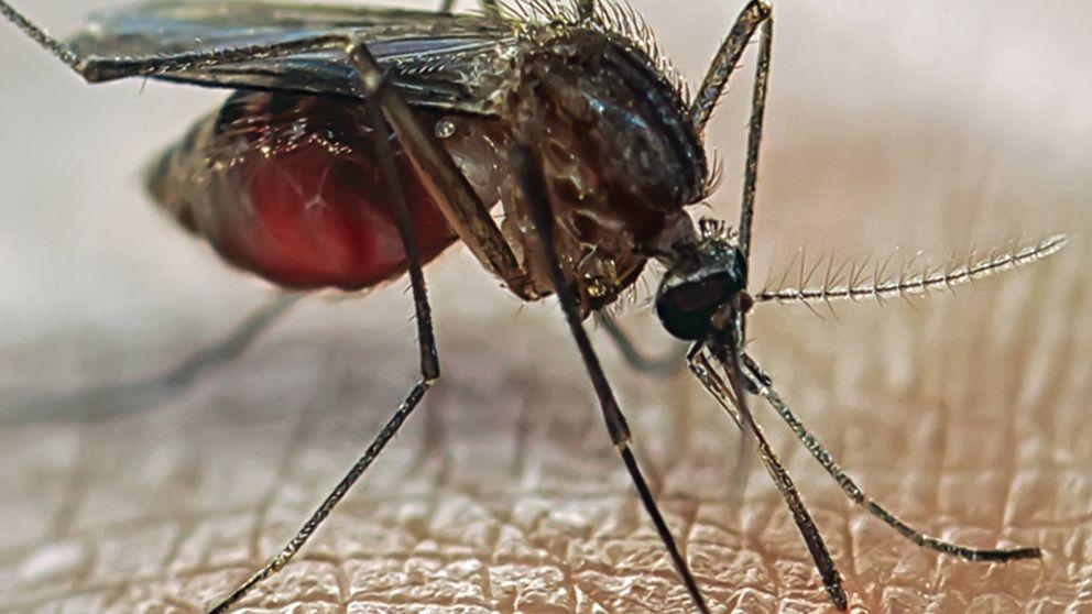 7 remedios contra las picaduras de mosquito habituales e ¿inútiles?